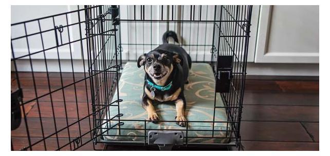 Sunbrella Dog Kennel Cushions New at Patio Lane