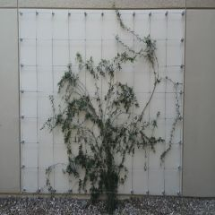 DIY Green Wall Cable Trellis Kit - Standoff System - 9 Sizes Available