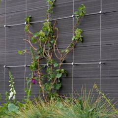 DIY Green Wall Cable Trellis Kit - Hub System - 12 Sizes Available